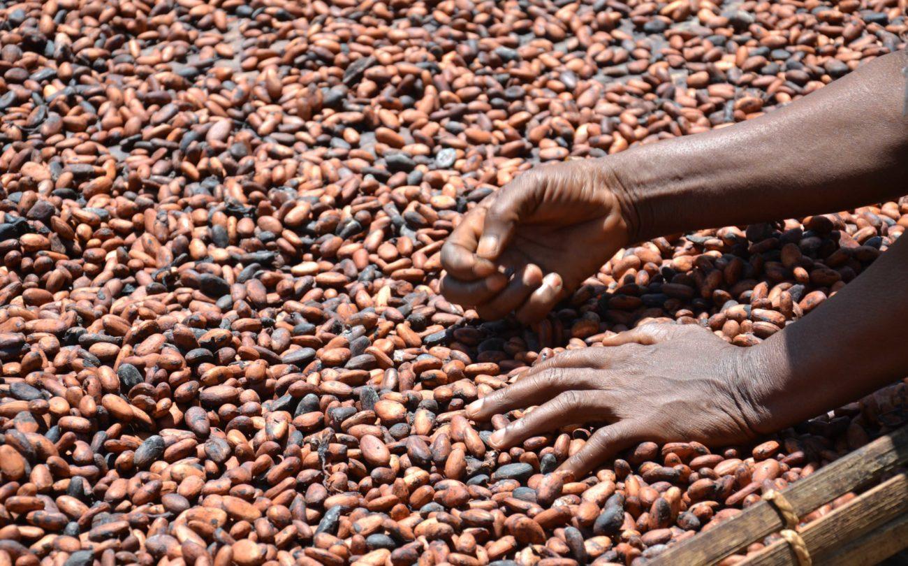 Freiwilliger Lösungsansatz gescheitert: Noch immer massenhafte Kinderarbeit im Kakaoanbau
