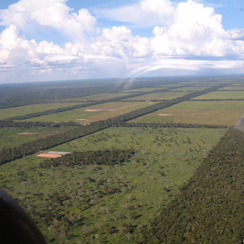 Wir brauchen ein Lieferkettengesetz, denn: BMW verwendet Leder, für das in Paraguay Wälder zerstört werden